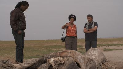 Een gestroopte olifant in Amboseli National Park, Kenia.