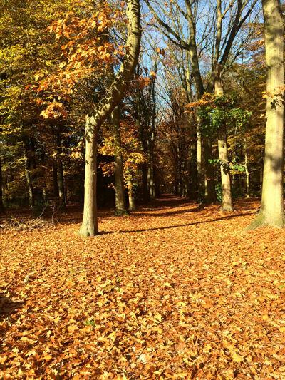 Het bos is prachtig. Ook hier is het rustig, beste standhouders.