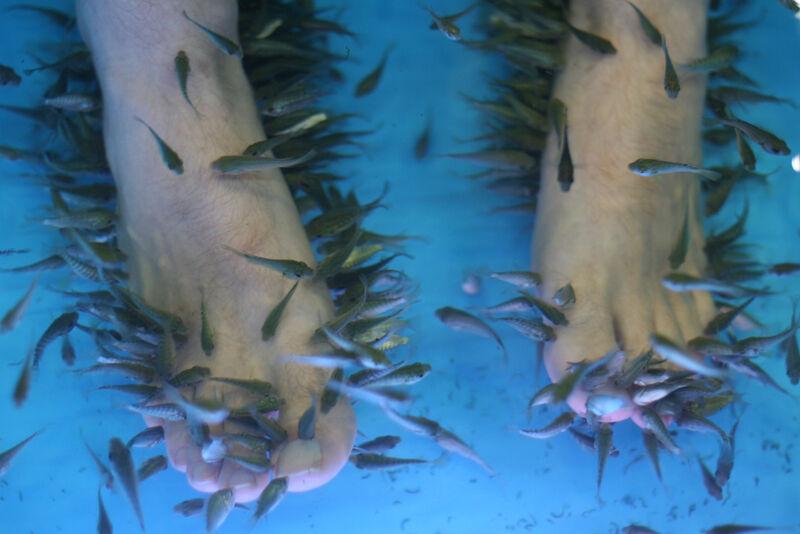 Garra Rufa visjes voeren een pedicure opdracht uit.