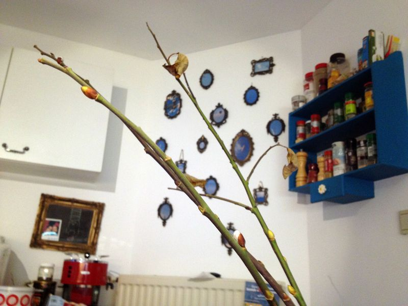 De dorre herfstblaadjes broederlijk op één tak met die fluwelen knopjes die pas rond Pasen de kop op horen te steken
