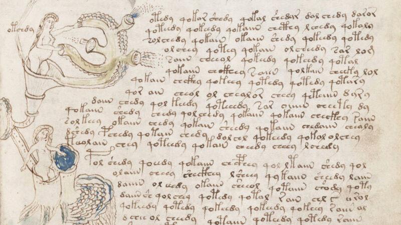 Voynich Manuscript: biologische tekening