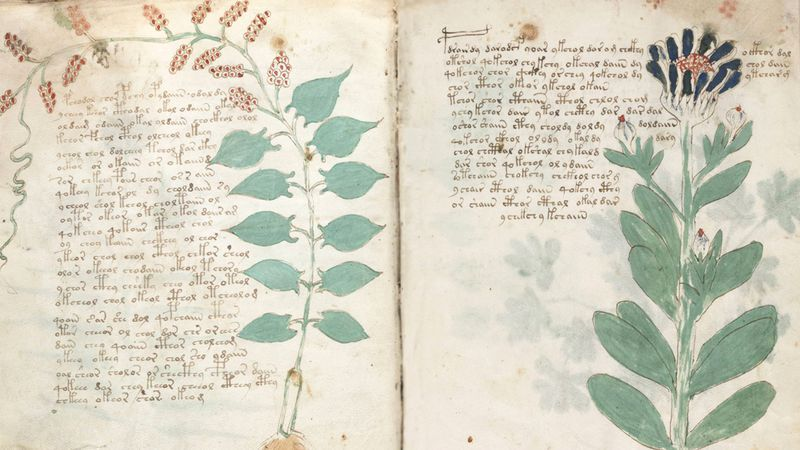 Voynich Manuscript: botanische tekeningen