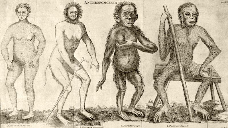 Afbeelding uit 'Systema Naturae' van Linneaus
