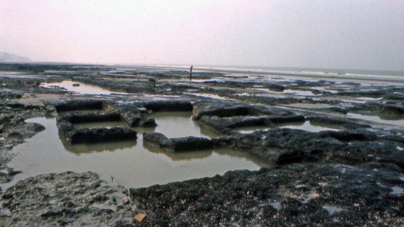 Sporen van veenwinning op het strand van Raversijde