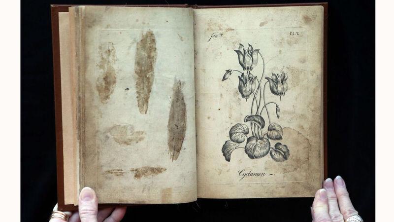 Duidelijke sporen van gedroogde planten in 'The Florist'