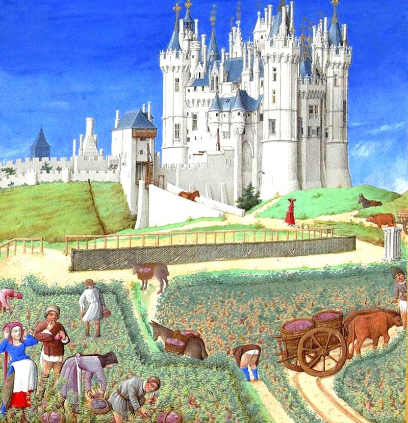 Wijnoogst in de middeleeuwen, 'Les très riches heures du duc de Berry'