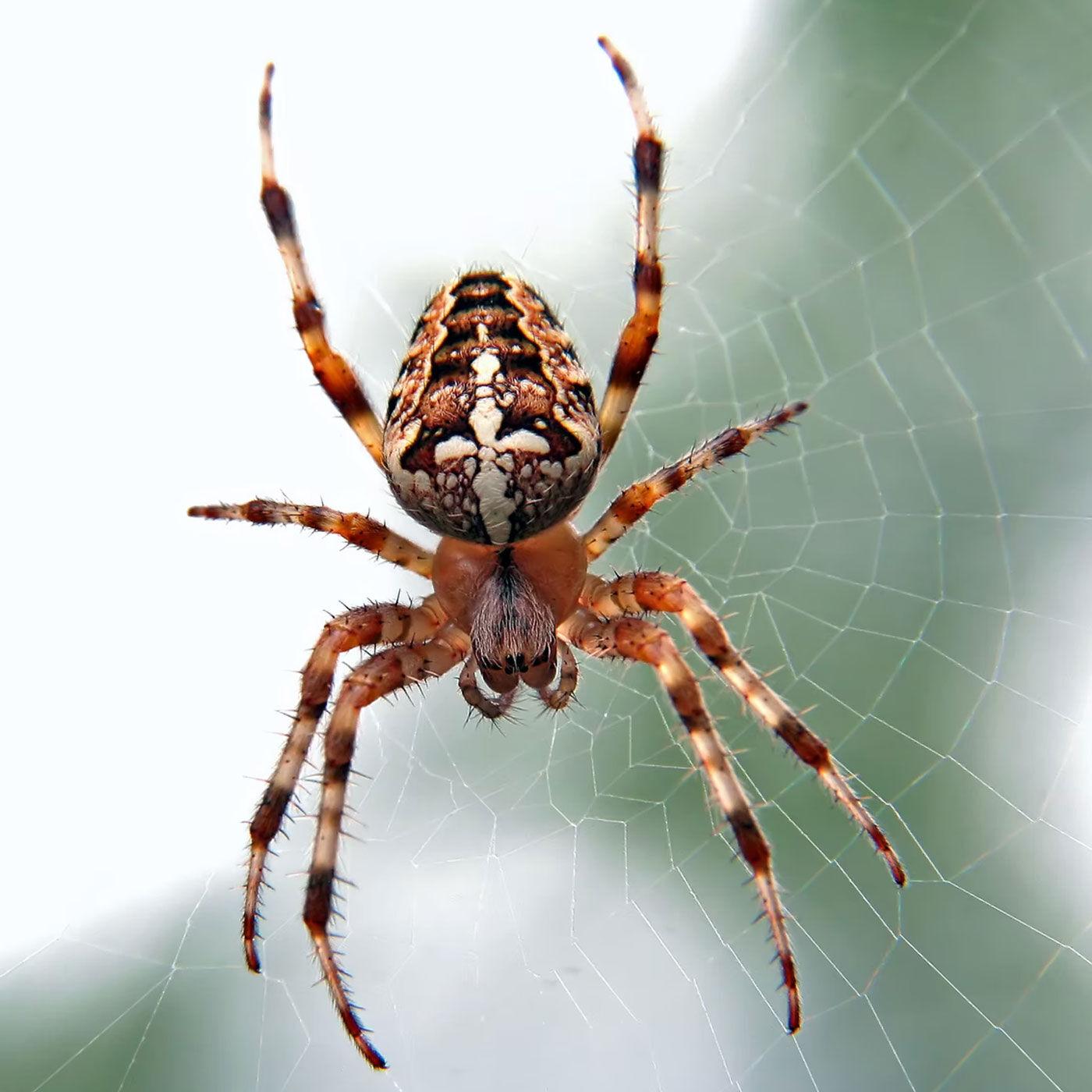 Bang van de spin