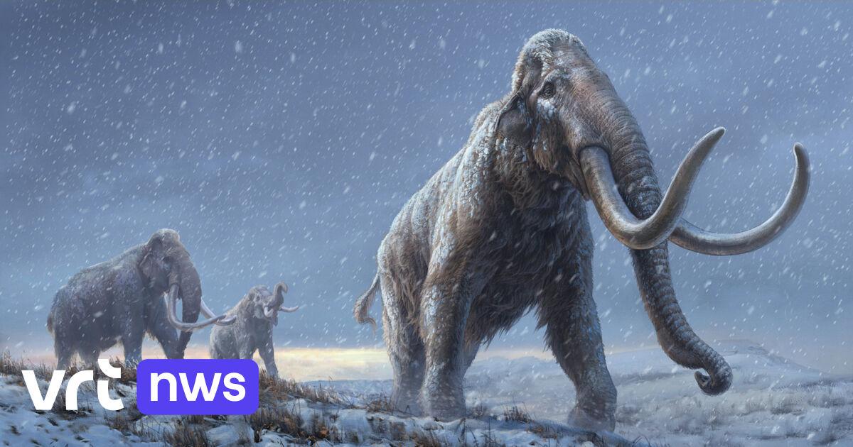 Oudste DNA ter wereld uit tanden van mammoeten levert een nieuwe soort op - VRT NWS