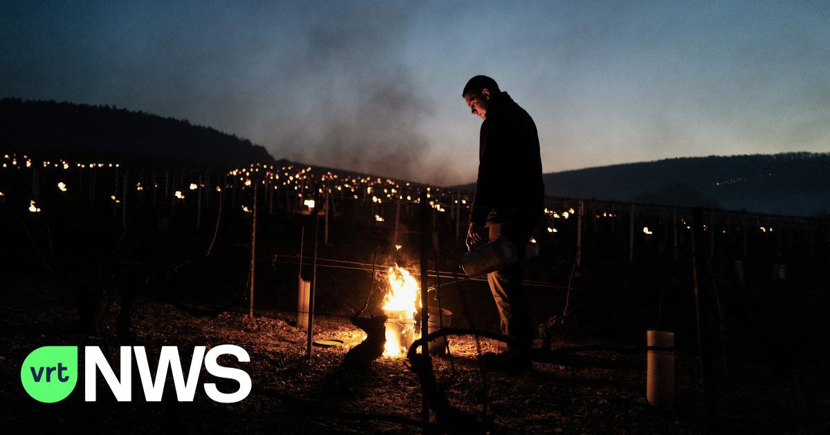 Franse wijnboeren vechten tegen vorst maar vrezen grootste misoogst in decennia