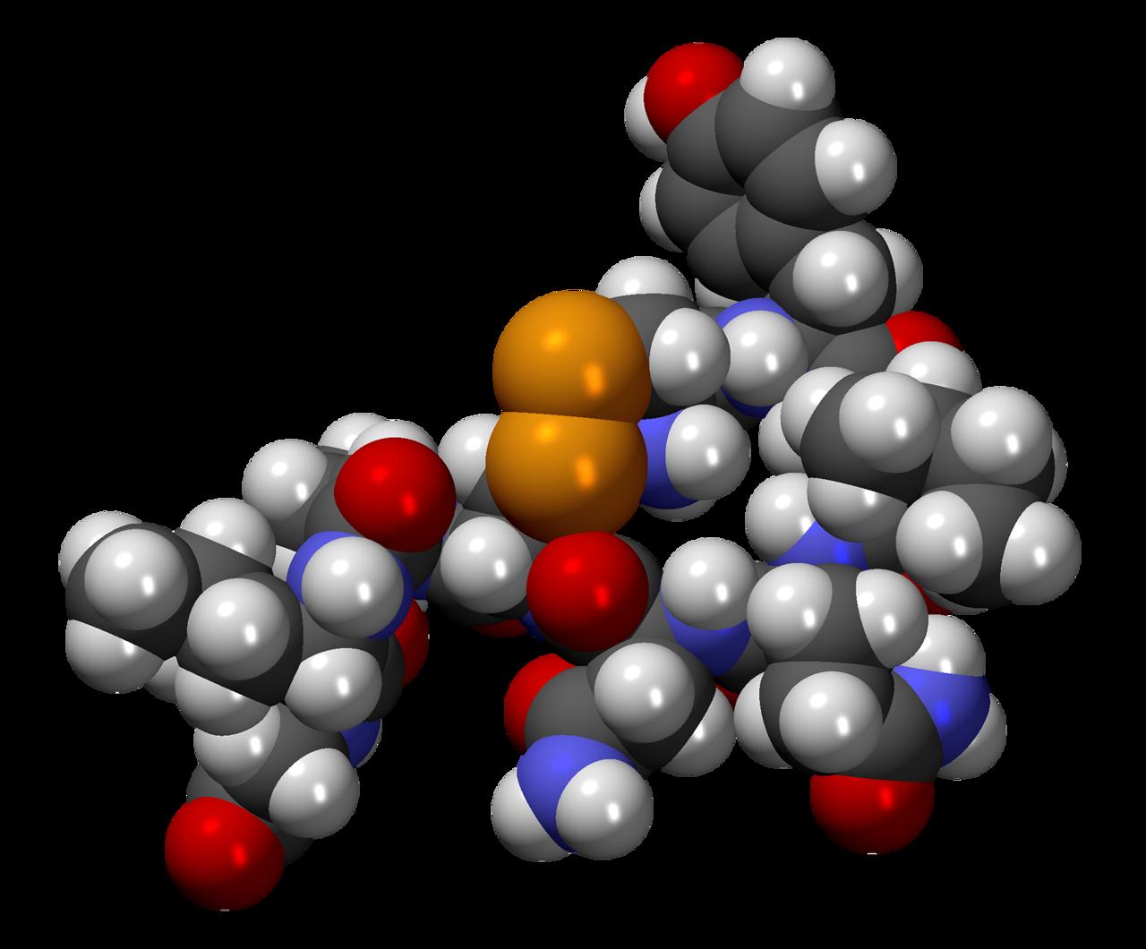 Oxytocine het knuffelhormoon