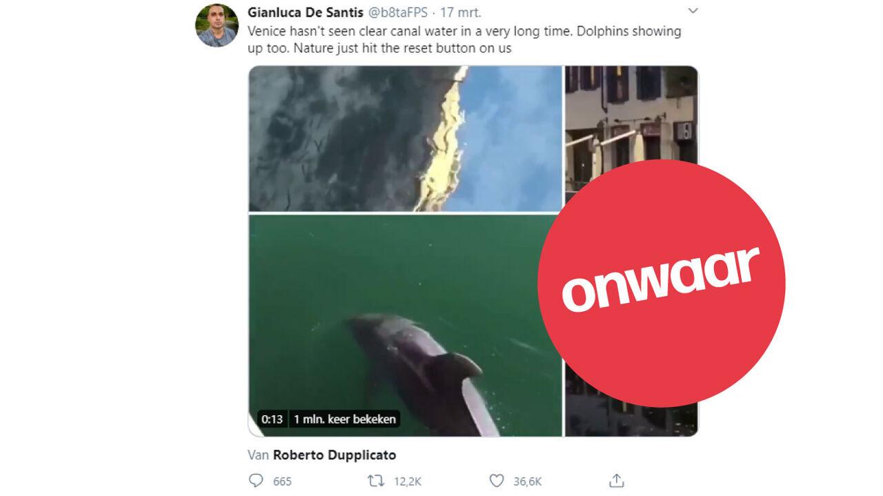 Een schermafbeelding van een tweet van iemand die beweert dat er dolfijnen in Venetië rondzwemmen.