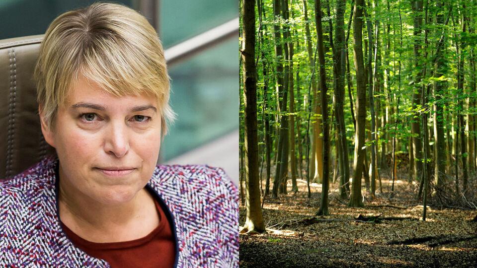Afbeeldingsresultaat voor falend bosbeleid Vlaanderen