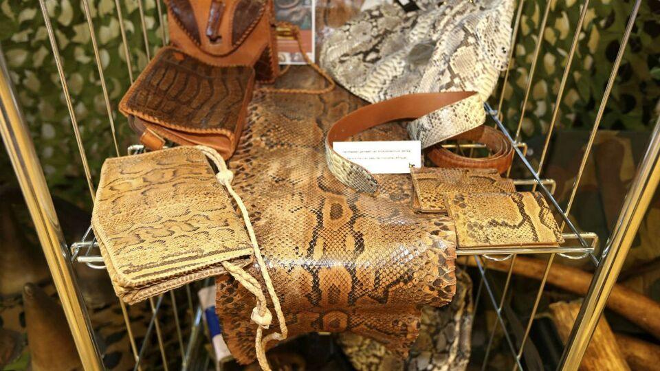 la belgique est la plaque tournante du commerce d animaux et de plantes sauvages flandre info. Black Bedroom Furniture Sets. Home Design Ideas
